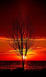 horizons-pillared-tree-phil-koch