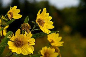 horizons-sunflowers-phil-koch