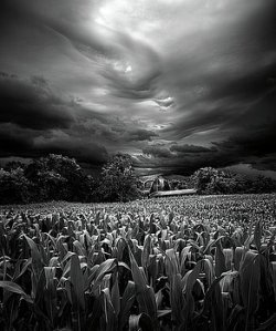 horizons-homesoil-stormed-phil-koch