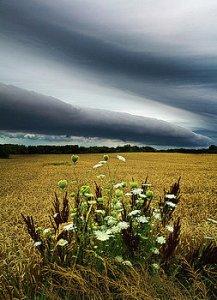 horizons-natures-bouguet-phil-koch
