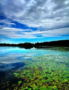 horizons-reflected-lillies-phil-koch