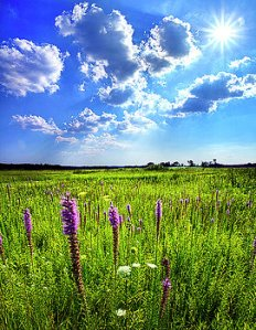 horizons-summer-day-phil-koch