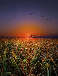 horizons-harvest-migration-phil-koch