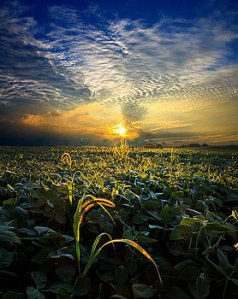 horizons-lucidity-phil-koch