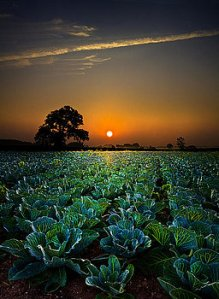 horizons-the-cabbage-patch-phil-koch