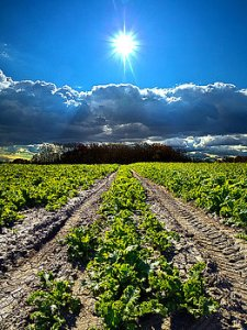 horizons-farmers-way-phil-koch
