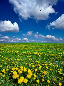 horizon-2-spring-phil-koch